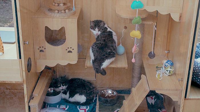 Ingegnere informatico crea un gattile con Intelligenta Artificiale e rinonoscimento facciale per 174 gatti