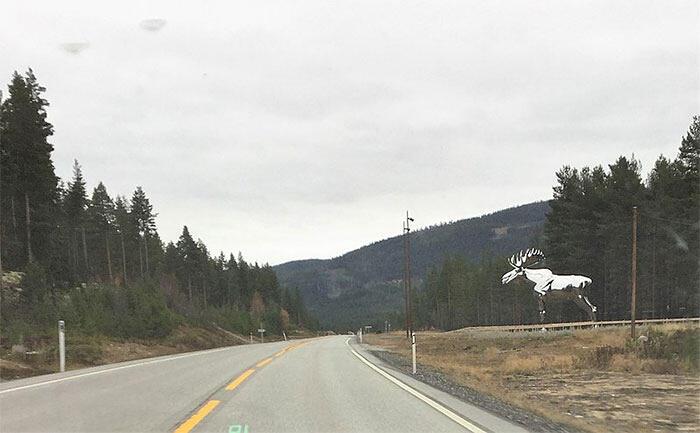 In Norvegia la più grande statua di alce del mondo protegge questi animali