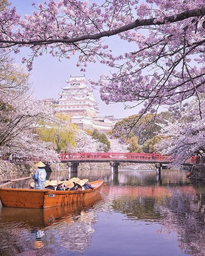 Fotografo cattura il magico inizio dei ciliegi in fiore in Giappone
