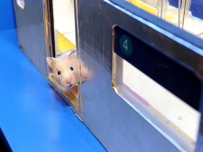 Le avventure di un piccolo criceto che prende la metro a New York