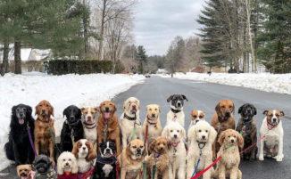 Dog sitter scatta ogni giorno bellissime foto di gruppo ai cani adorabili che porta a passeggio