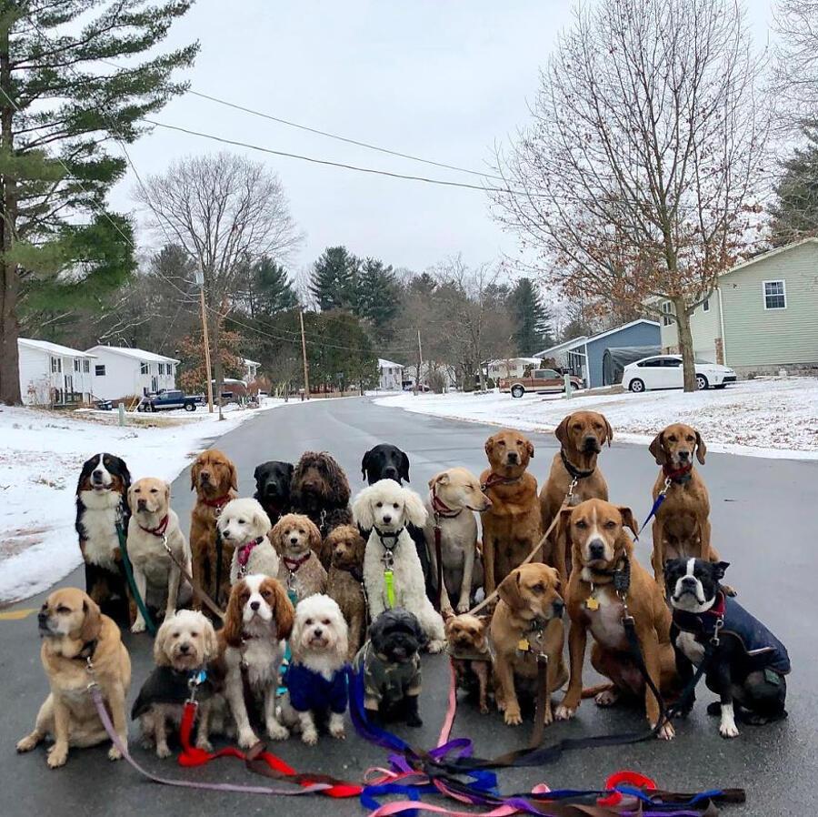 Dog sitter scatta bellissime foto di gruppo di cani adorabili