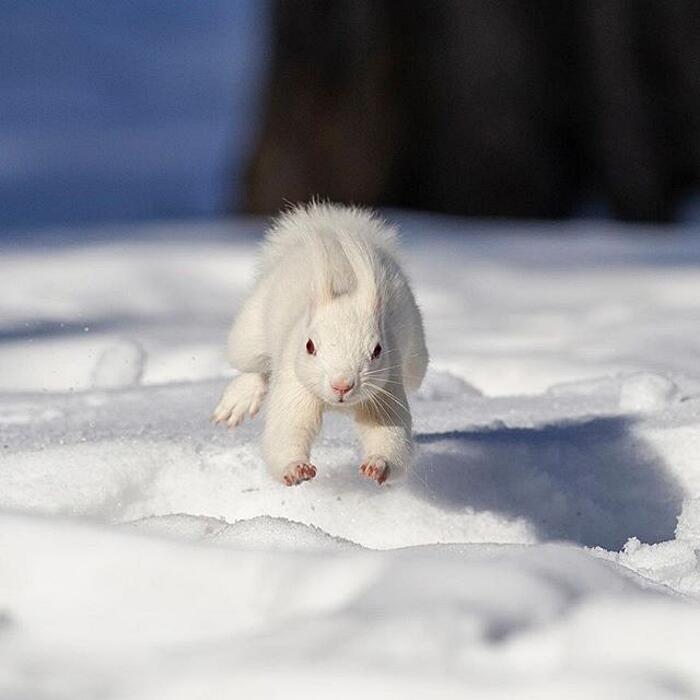 Foto Animali Albini