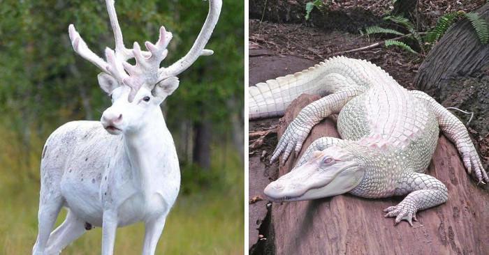 27 animali albini dalla bellezza magica
