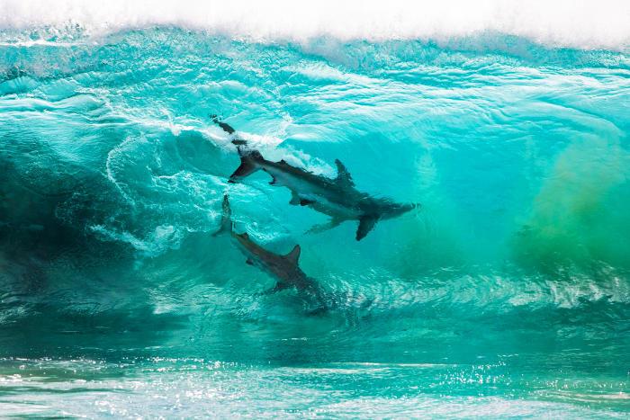 Fotografa una coppia di squali attraverso una grande onda