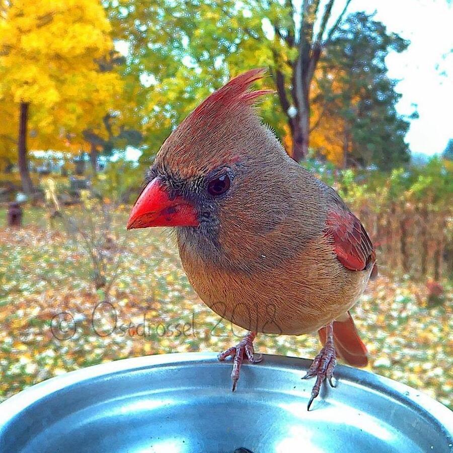 Foto Uccelli Mentre Mangiano