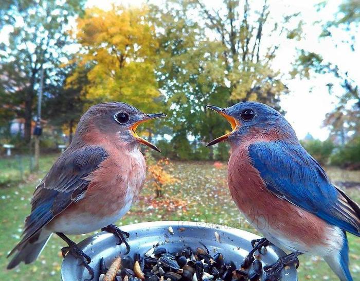 Prepara una postazione fotografica per uccelli e cattura stupefacenti primi piani mentre mangiano