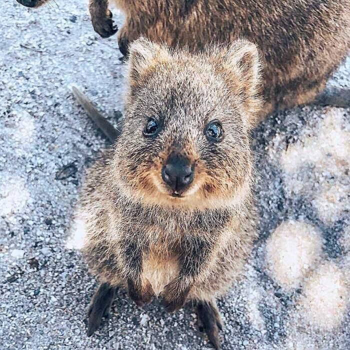 Foto di animali carini possono salvare la tua relazione sentimentale