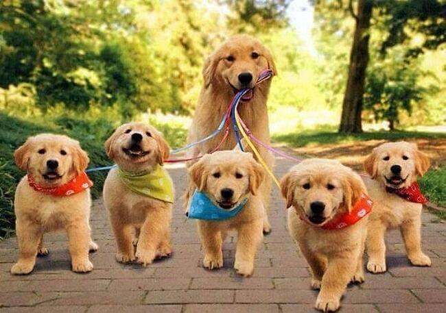 Animali con i loro cuccioli