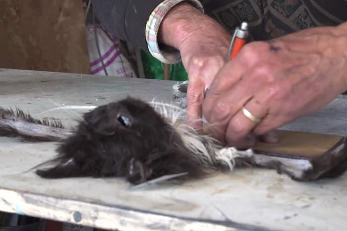 L'Australia vuole sterminare 2 milioni di gatti lanciando salsicce avvelenate da aerei