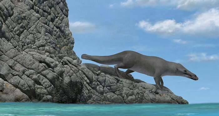 Fossile di una balena a 4 zampe vissuta 40 milioni di anni fa scoperto in Perù