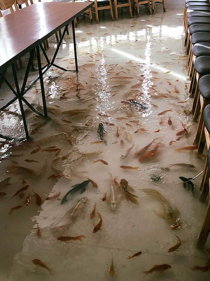 In Vietnam, un bar allagato con pesci che nuotano sul pavimento, Amix Coffee