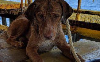Operai di una piattaforma petrolifera salvano un cane che nuotava a 220 km dalla costa