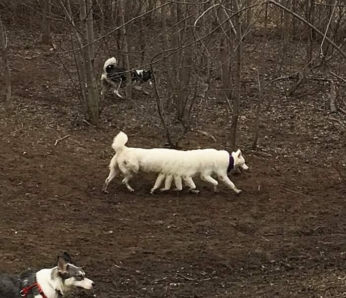 Divertenti foto panoramiche con animali venute male