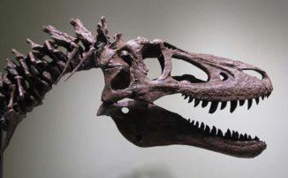 Cacciatore di fossili vende resti di un cucciolo di T-Rex su Ebay e gli scienziati ne sono indignati