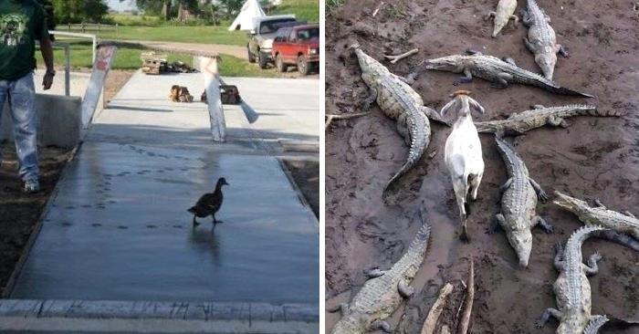 30 animali che se ne fregano completamente