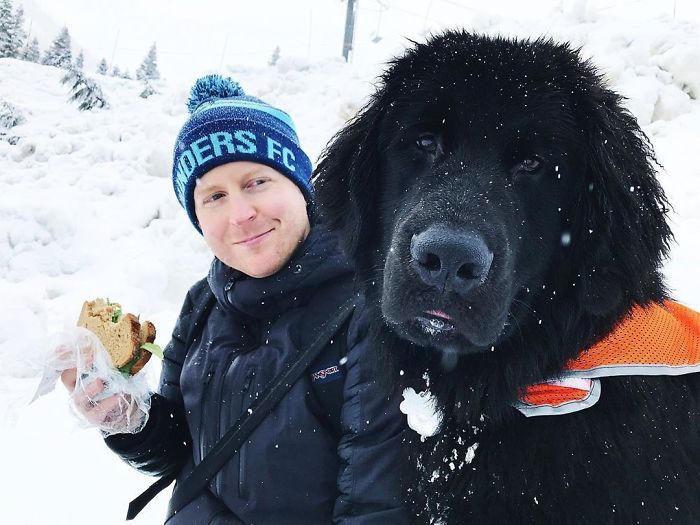 30 foto divertenti di Terranova mostrano quanto siano veramente grandi