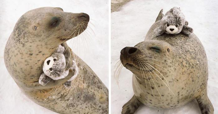 25 animali follemente innamorati del loro peluche