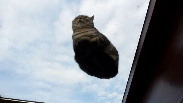 Gatti divertenti sul vetro