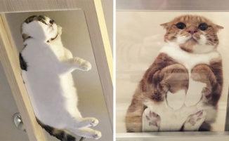 30 divertenti motivi per avere un tavolo di vetro se hai un gatto