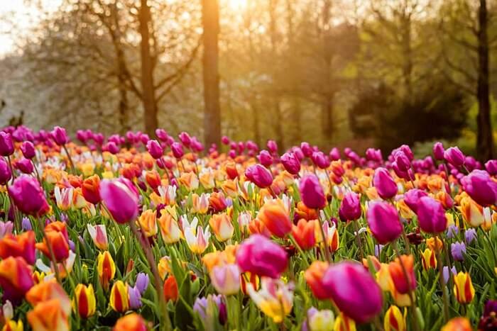 I giardini più belli del mondo