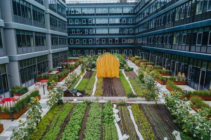 Un orto condominiale bio dinamico per migliorare la qualità della vita e dell'ambiente