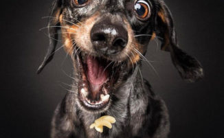 Foto esilaranti di cani che cercano di catturare crocchette a mezz'aria