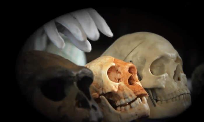 L'uomo di Callao o Homo Luzonensis