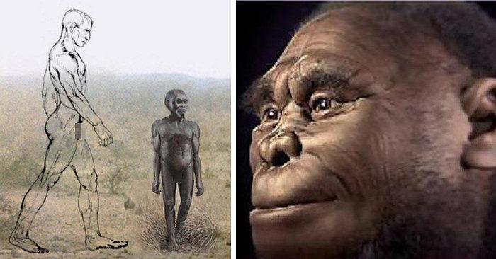 Scoperta nuova specie di uomo primitivo alto come un Hobbit, contemporaneo dell'Homo Sapiens: l'Uomo di Callao