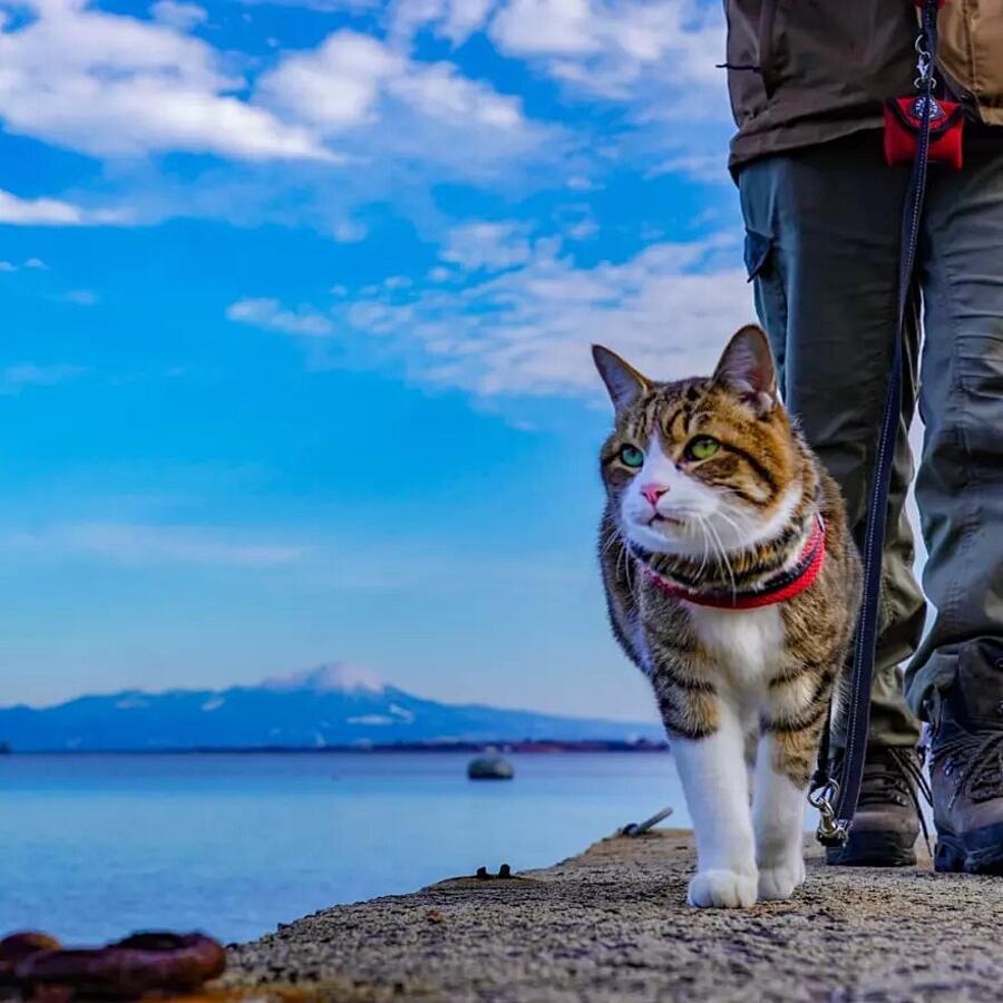 Viaggia Con I Suoi Gatti In Giappone