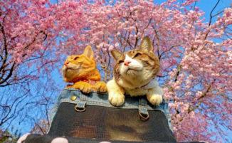 Viaggia con i suoi gatti per il Giappone e Instagram si innamora