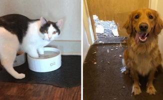 20 animali domestici assolutamente inconsapevoli della situazione