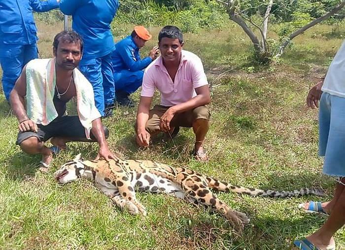 Bracconieri sorridenti postano foto di leopardo in via di estinzione ucciso