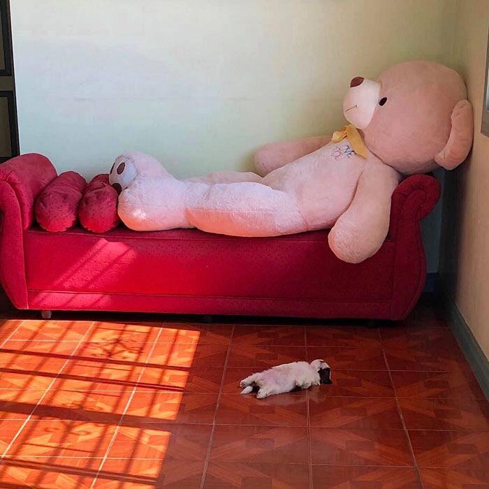 Foto Cucciolo Shih Tzu Addormentato