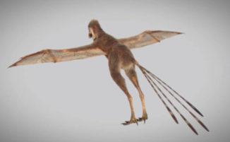 Scoperto un dinosauro con ali di pipistrello che viveva 163 milioni di anni fa