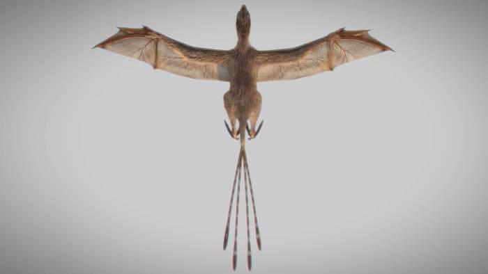 Dinosauro con ali di pipistrello: Ambopteryx longibrachium