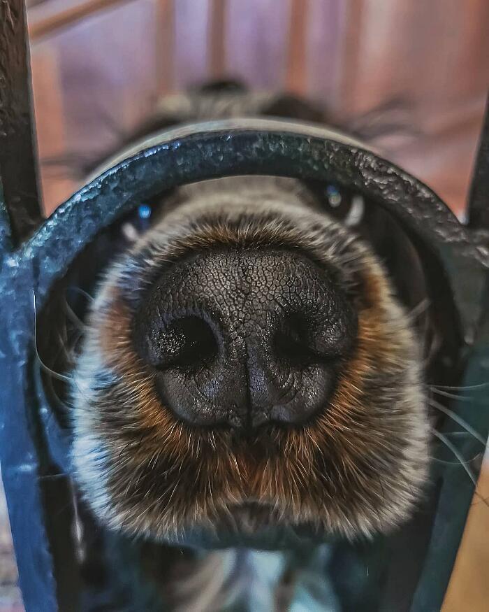 Foto Animali Adorabili