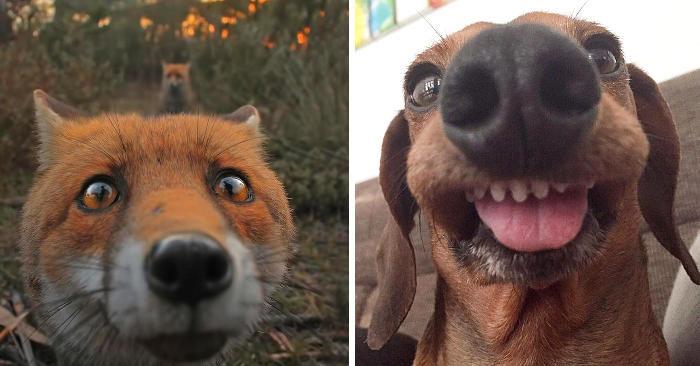 20 foto di adorabili animali incuriositi dalla fotocamera