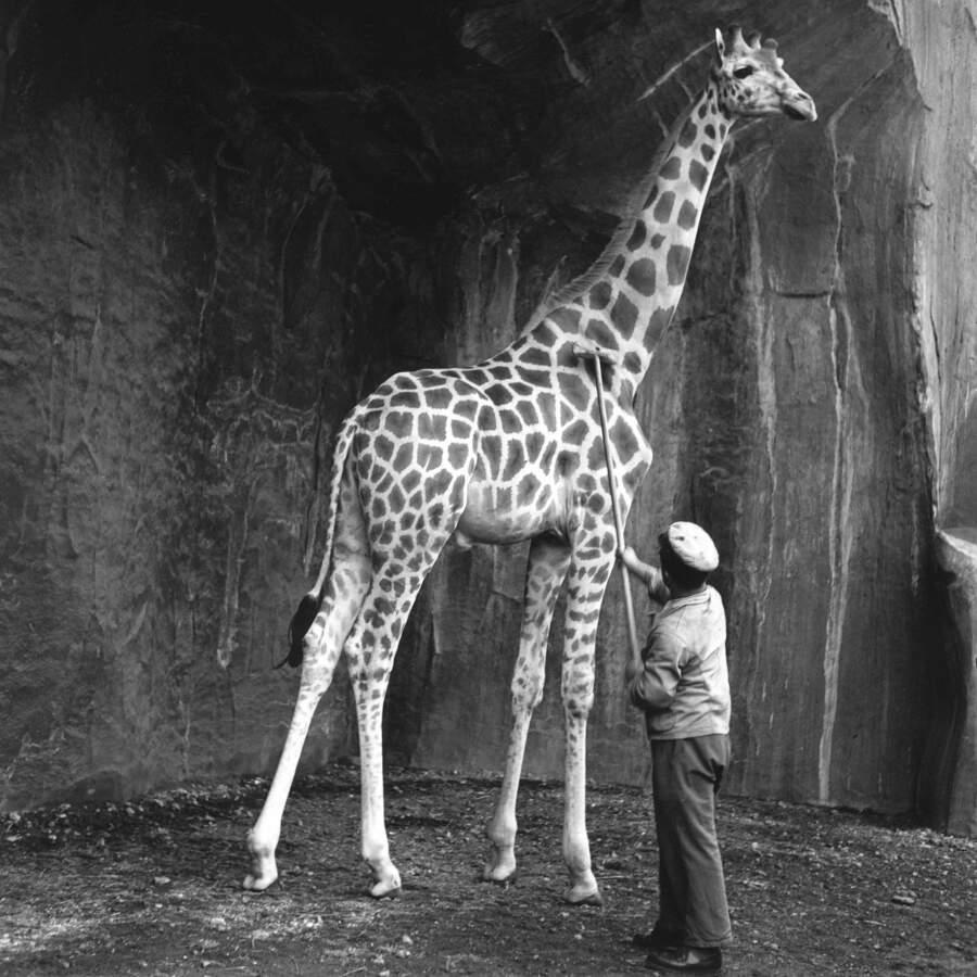 Foto bianco e nero della Parigi degli anni '30 e '40, Roger Schall
