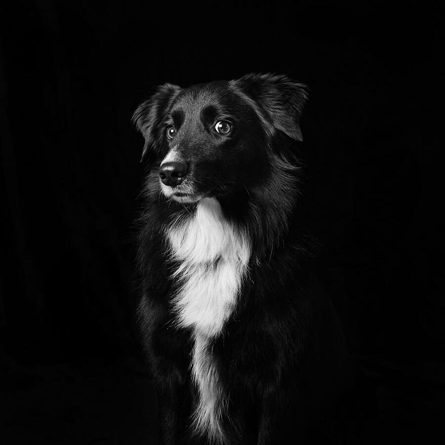 Foto Cani E Gatti Neri Emma O'Brien
