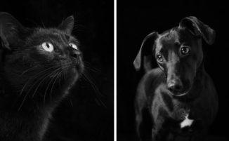 Cani e gatti neri sono ultimi nella lista delle adozioni, una serie di ritratti contro la superstizione