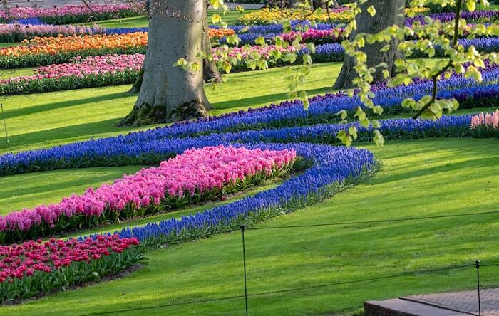 Fiori Giardino Keukenhof Olanda