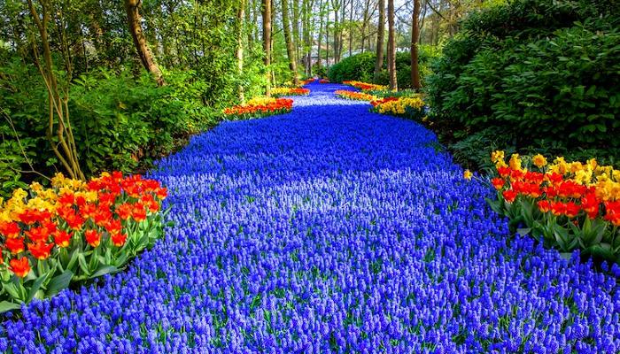 Nel famoso giardino olandese di Keukenhof fioriscono 7 milioni di fiori