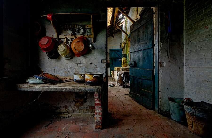 Fotografa luoghi abbandonati con il suo bull terrier, Alice van Kempen