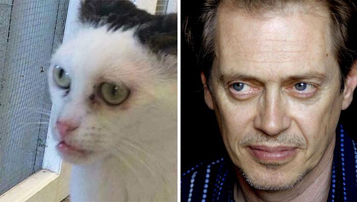 Gatto Che Assomiglia a Steve Buscemi