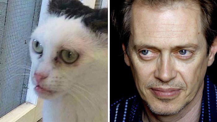 Adotta un gatto abbandonato e si accorge che assomiglia a Steve Buscemi