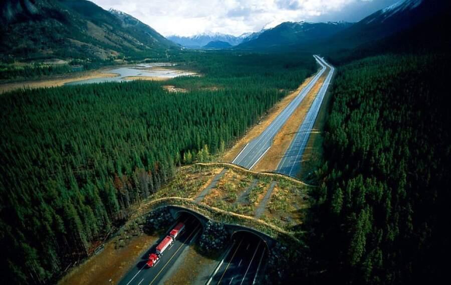 Ecodotti, ponti per animali selvatici