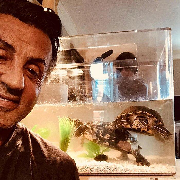 Le tartarughe di Rocky sono ancora vive 43 anni dopo