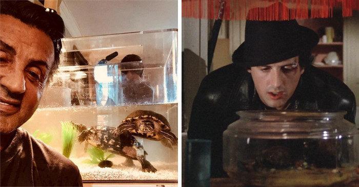 Le tartarughe di Rocky sono ancora vive, eccole 43 anni dopo con Sylvester Stallone