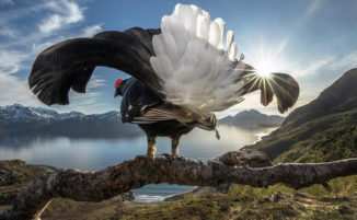 I vincitori del BigPicture Natural World Photography Competition